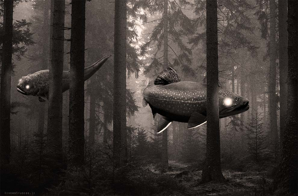 Forrest Fish Dreams